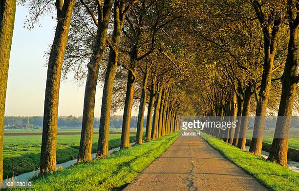 Row of Trees along a Country Road