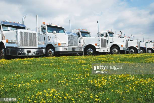 A row of trucks lined up in front of a field of flowers