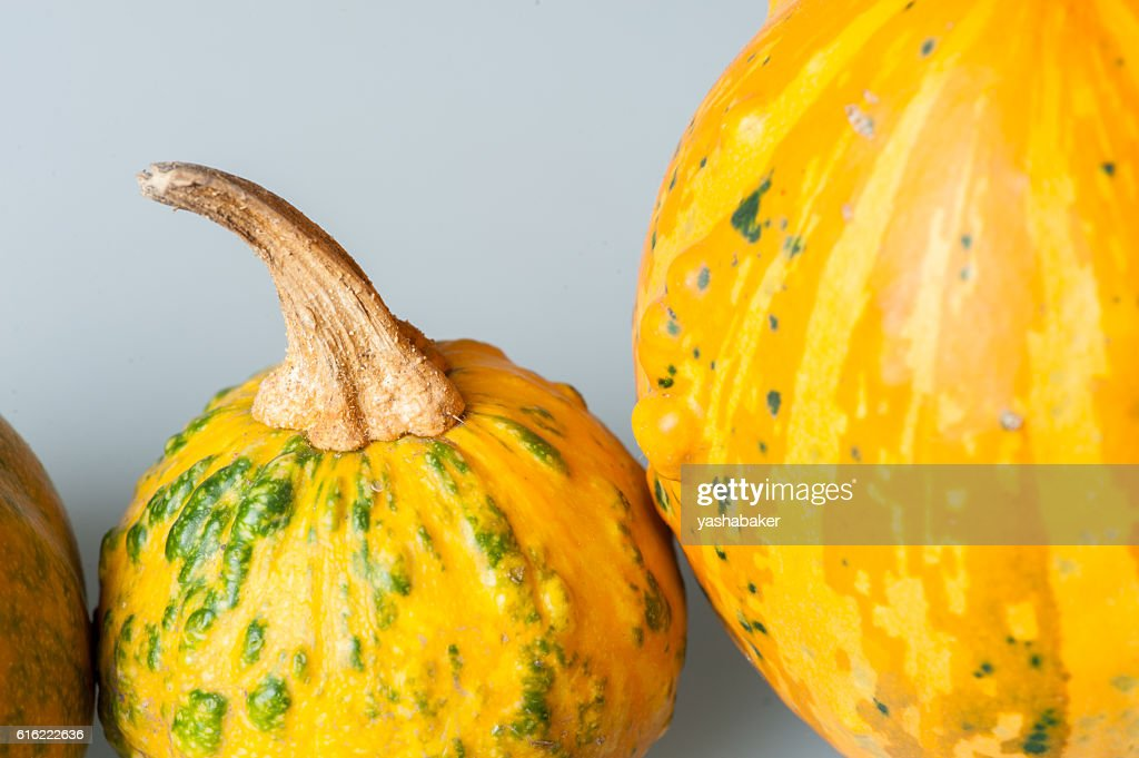 Row of various organic gourds of decorative pumpkins : Stock-Foto