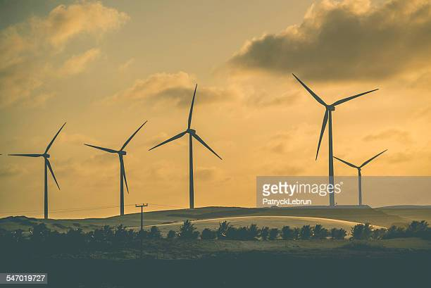 A row of wind turbine at sunset, Paracuru, Brazil