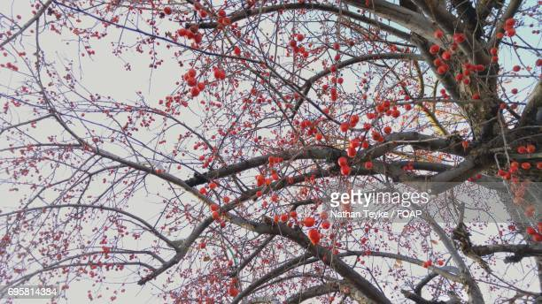 Rowanberries growing on tree