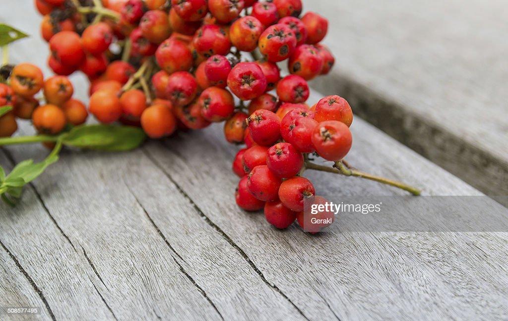Sorbe et ashberry sur une planche de bois : Photo