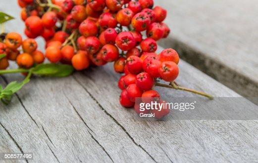 Rowanberry or ashberry on a wooden board : Bildbanksbilder