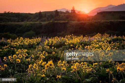 Rowena Crest Sunset