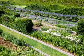 Rows of beautifully designed hedges