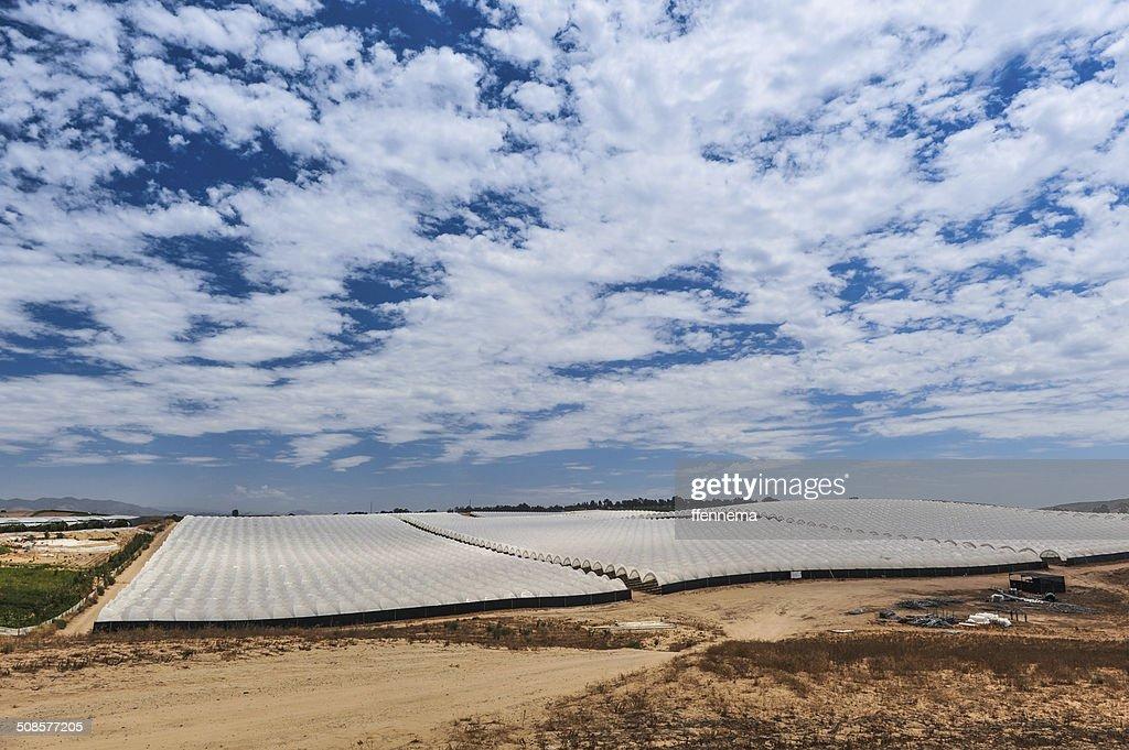 Rows of covered crops in field under sky : Bildbanksbilder