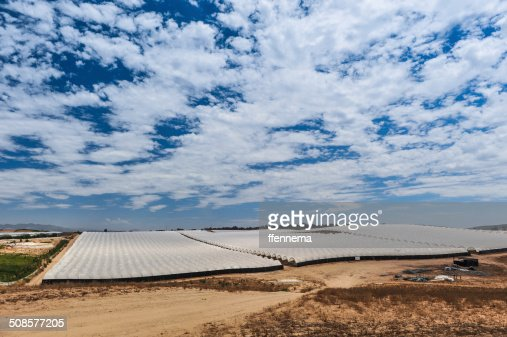 Rows of covered crops in field under sky : Stockfoto