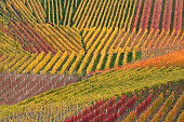 Rows of crops on hillside