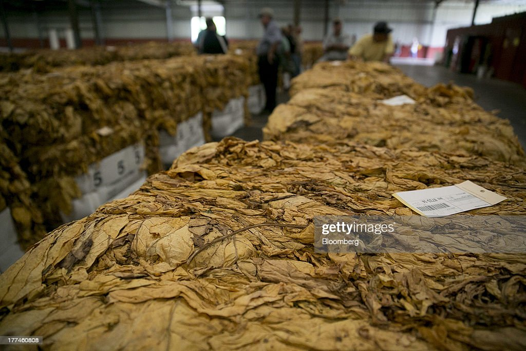 Rows of flue-cured tobacco bales sit on display prior to an auction at the Old Belt Tobacco Sales warehouse in Rural Hall, North Carolina, U.S., on Tuesday, Aug. 20, 2013. President Barack Obama's proposal in April to raise federal excise taxes on cigarettes by about 93%, to $1.95 a pack, is not likely to gain political support, due in part to weak consumer spending amid sluggish wage growth in recent years. Photographer: Andrew Harrer/Bloomberg via Getty Images
