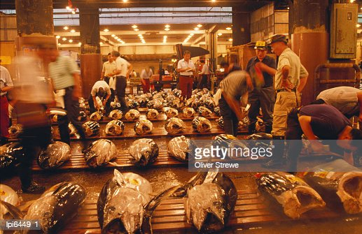 Rows of giant tuna for sale at Tsukiji Central Fish Market, Tokyo, Japan
