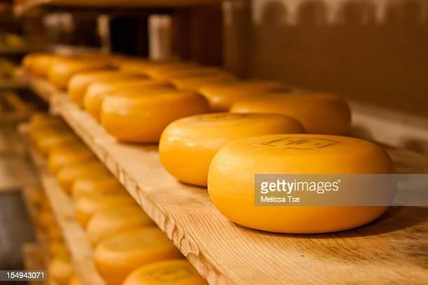 Rows of Gouda Dutch Cheese