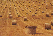 Rows of round bales in field