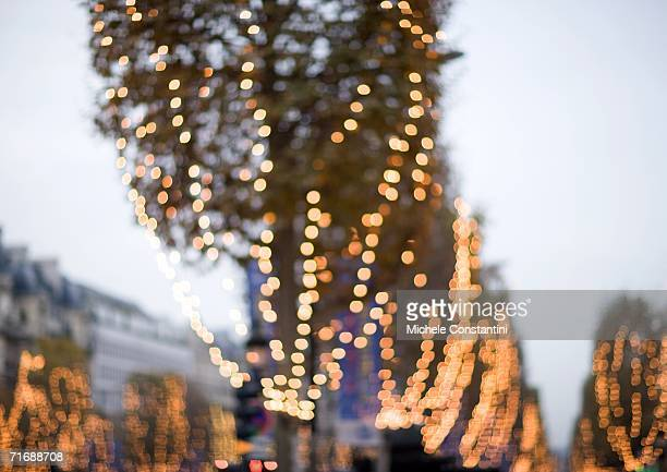 Rows of trees with christmas lights, low angle view