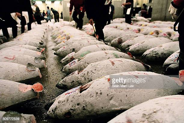 Rows of Tuna at the Tsukiji Fish Market