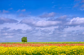 Rows of Wildflowers