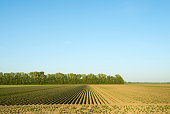 Rows of young crops in field landscape