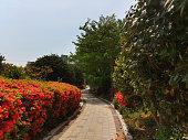 Royal azalea garden