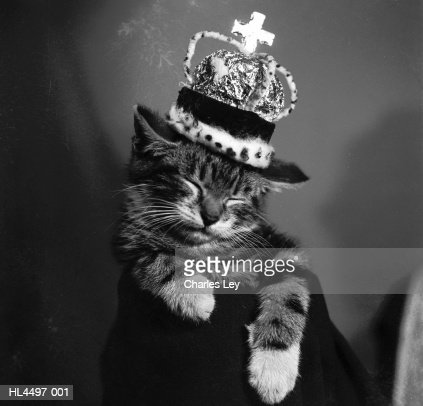 Royal Cat : Stock Photo