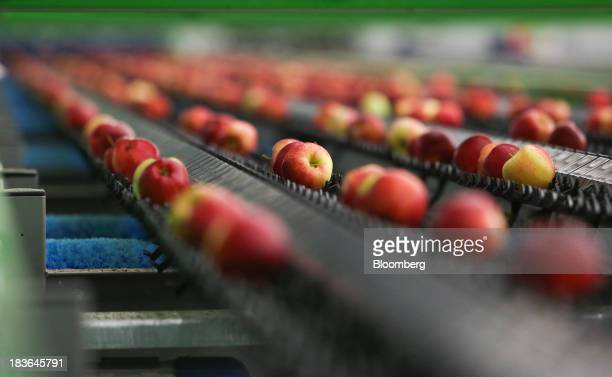 Royal gala apples pass along a conveyor belt at AC Goatham Sons' packing house in Hoo UK on Tuesday Oct 8 2013 UK retail sales grew 07 percent in...
