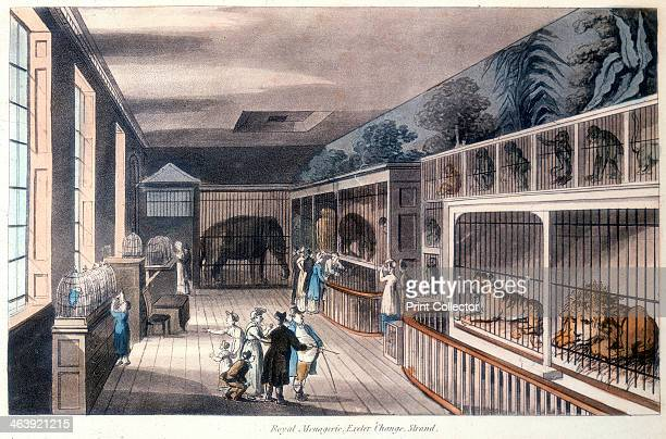 'Royal Menagerie Exeter Change Strand London' c1820 Edward Cross kept his menagerie here until Exeter Change was demolished in 1829 and he moved it...