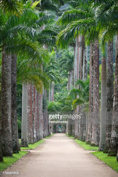 Royal Palms survolez Jardim Botanico de Rio de Janeiro