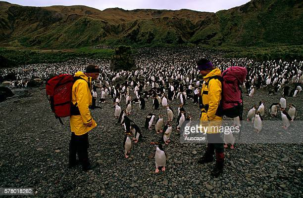 Royal penguins Eudyptes schlegeli colony and expeditioners Macquarie Island Tasmania Australian Sub Antarctic