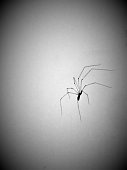 Nice Shot of a an Eight Legged Visitor - Spider on a Wall - Should I Kill this Spider - Not a Big Fan of Spiders - Who Likes Eight Legged Critters of the Spider Kind - Squash it Daddy - Just One of th