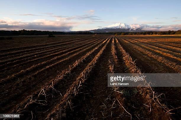 Ruapehu and fields