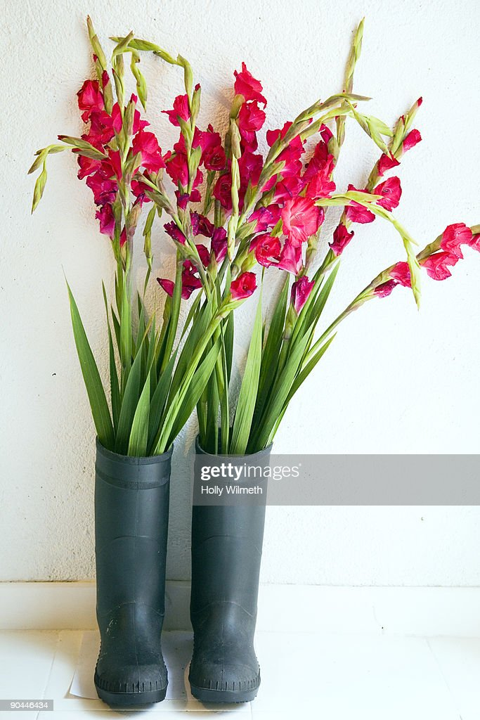 Rubber boots with red flowers. : Stock Photo