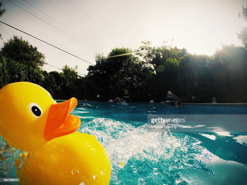 rubber ducky u0027s big adventure a quick peek into the life of a