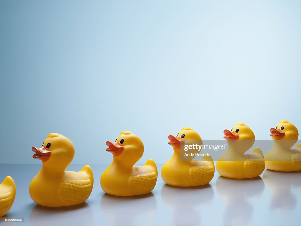 Rubber ducks in a row : Stock Photo