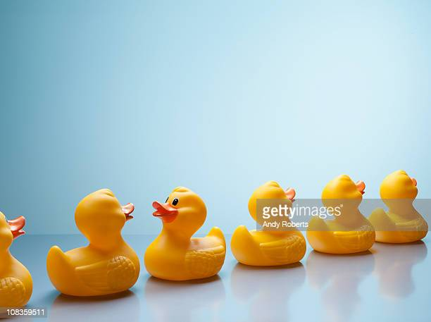 Rubber ducks in a row with one facing backwards
