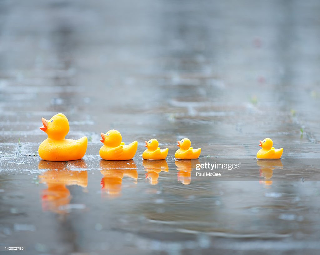 Rubber ducks : Stock Photo
