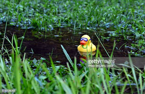 Rubber ducky in puddle