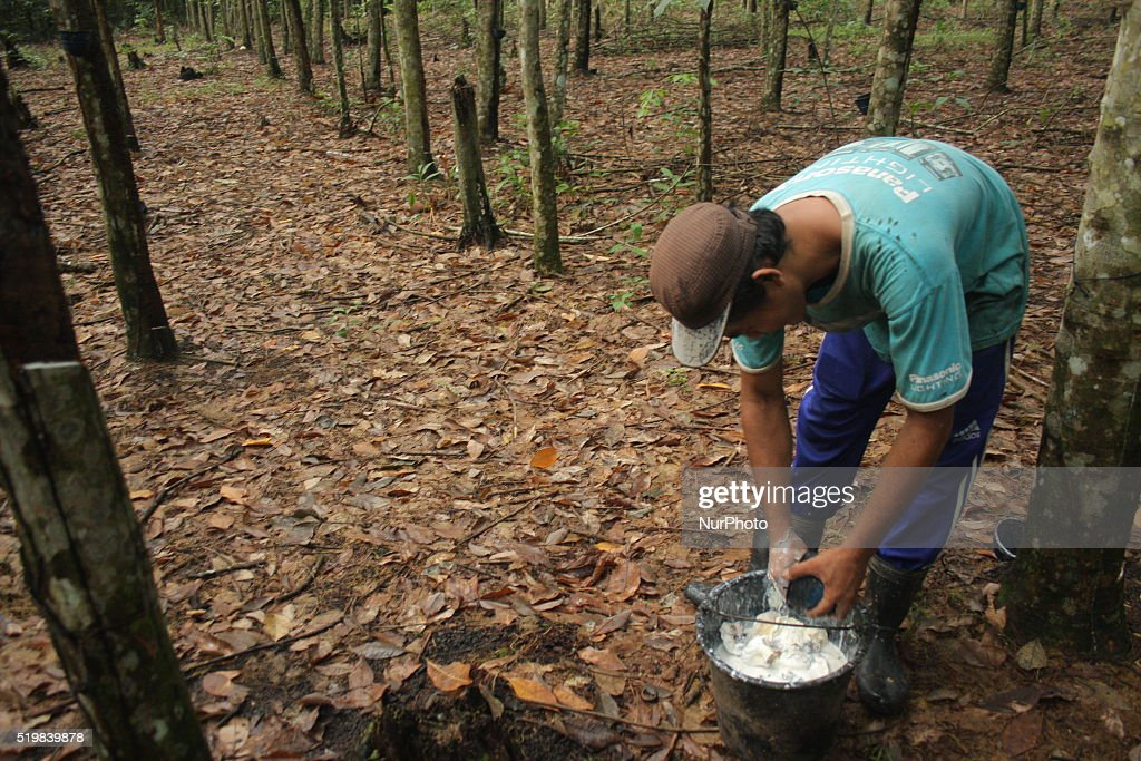 Rubber farmers in prabumulih south sumatra getty images for Gardening jobs for april