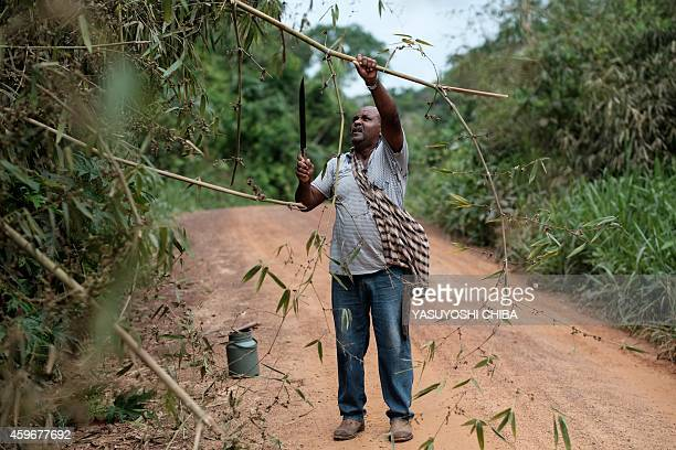 Rubber tapper Raimundo Pereira cuts branches on his way back home after collecting sap from rubber trees in the forest in Xapuri Acre State in...