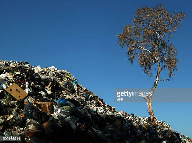 Rubbish is piles up around a tree at a temporary garbage dump northeast of the Lebanese capital Beirut on December 21 2015 The rubbish crisis began...