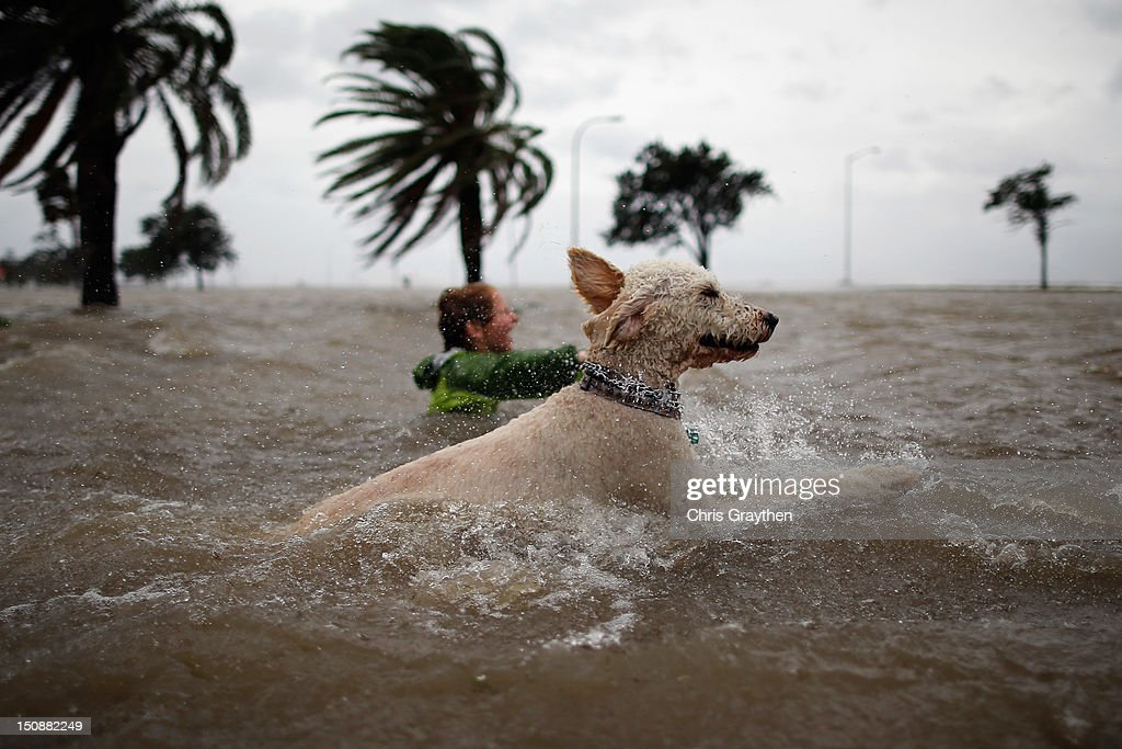 Ruffin Henry and Scout the dog swim in the rising water of Lake Pontchartrain as Hurricane Isaac approaches on August 28 2012 in New Orleans...