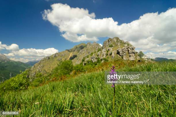 Rugged mountains and green meadows with wild orchid