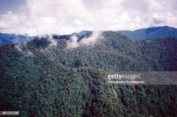 Rugged Rainforest