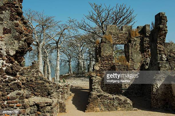 Ruins of Fort Bullen and baobab trees on James Island a Unesco World Heritage Site The island is situated about 30kms from the mouth of the Gambia...