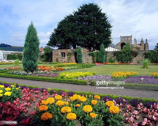 Ruins of Melrose Abbey from abbey garden Melrose Scottish Borders Scotland United Kingdom