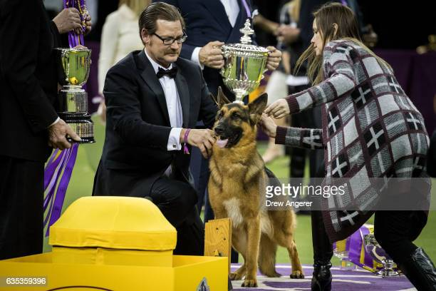 Rumor the German Shepherd and handler Kent Boyles pose for photos after winning Best In Show at the Westminster Kennel Club Dog Show at Madison...