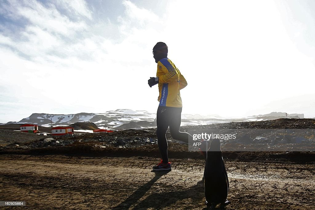 A runner passes next to a penguin as he takes part in the Antarctic Marathon, held for the first time in the frozen continent, on March 1, 2013. Fifty-two competitors from different countries took part in the race. AFP PHOTO/JOEL ESTAY