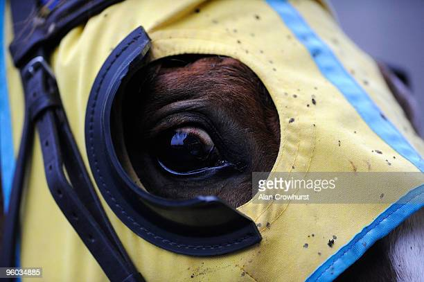 A runner wears yellow blinkers at Ascot racecourse on January 23 2010 in Ascot England