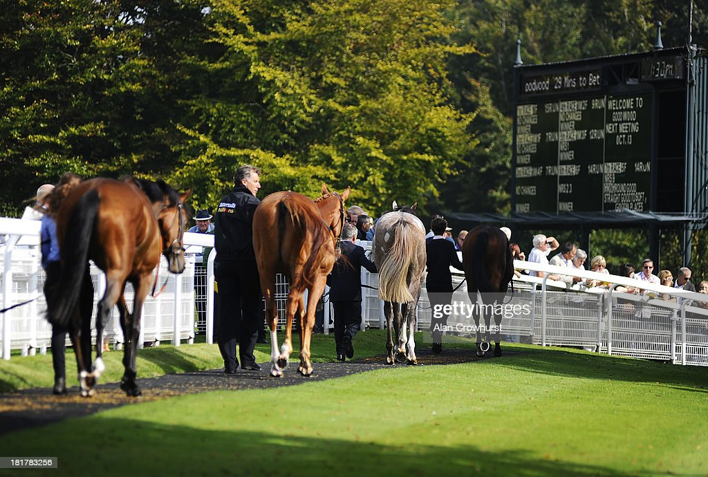Runners are led in the pre-parade ring at Goodwood racecourse on September 25, 2013 in Chichester, England.
