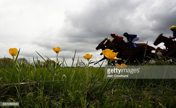 Runners pass buttercups down the back straight at Bath Racecourse on May 18 2016 in Bath England