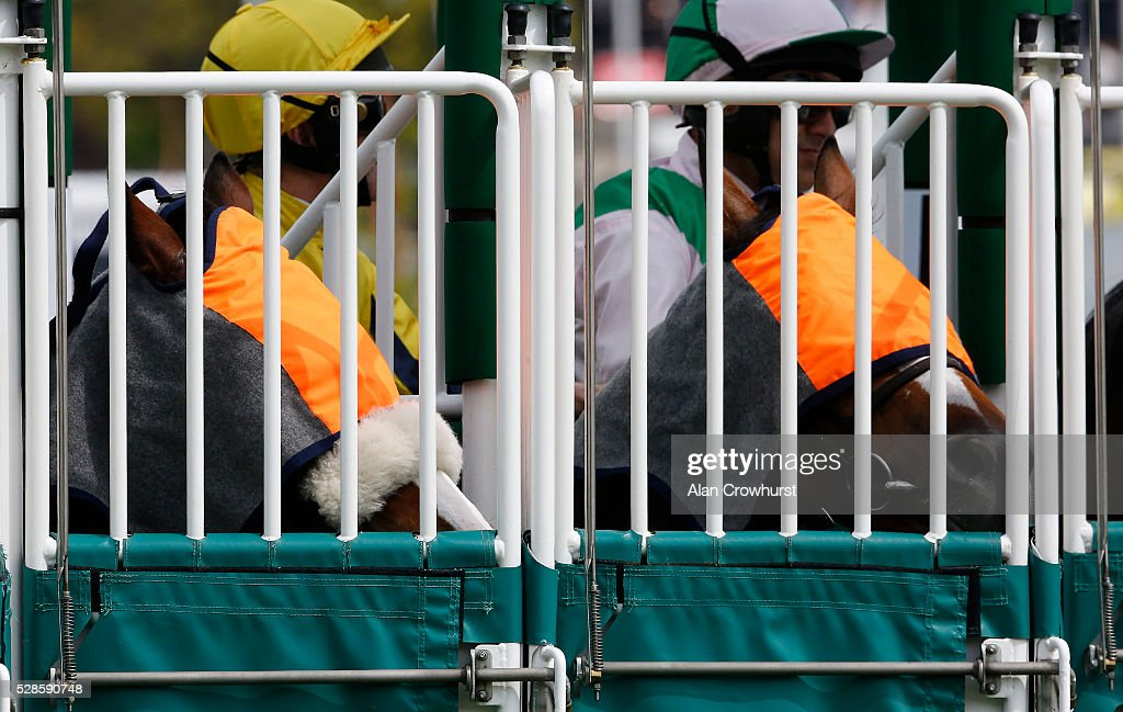 Runners wait in the stalls with blindfolds on at Chester racecourse on May 6, 2016 in Chester, England.