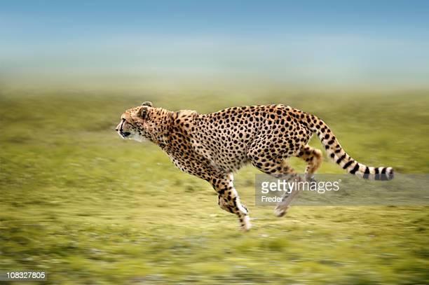 running Chitá