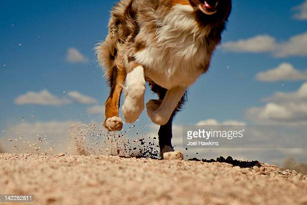 Running dog and rocks